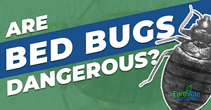bed bug health risks