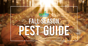 fall season pest guide